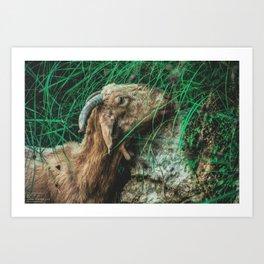 Iberic Goat eating some natural green Art Print
