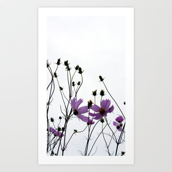 Mexican Aster 2 Art Print