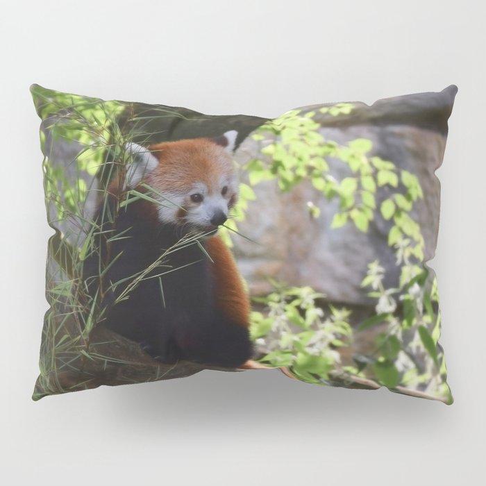 House d'oreiller panda roux
