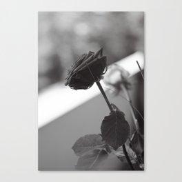 Rosae (3) Canvas Print