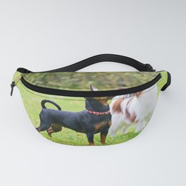 Outdoor portrait of a miniature pinscher and papillon purebreed dogs on the grass Fanny Pack