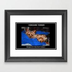 Yorkshire Terrier - Designed for Maximum Comfort Framed Art Print