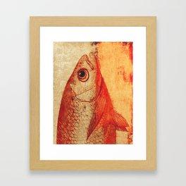 Piscibus 11 Framed Art Print