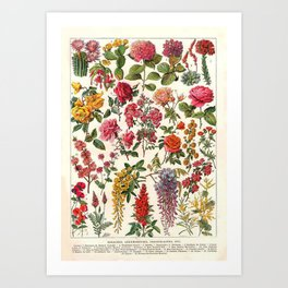 Vintage French Floral Print Art Print