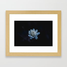 Flower photography by Xuan Nguyen Framed Art Print