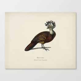 Female great curassow (Hocco roux) illustrated by Charles Dessalines D' Orbigny (1806-1876) 6 Canvas Print