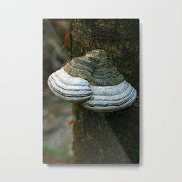 FUNGI -  Lichen Metal Print