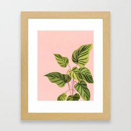 Upstart / Tropical flora Framed Art Print