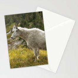 Old Beauty Stationery Cards