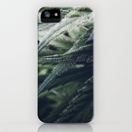 Cannabis Marijuana Leaf Weed Herb California Colorado Nature Photography  iPhone Case