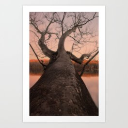 nature's perspective Art Print