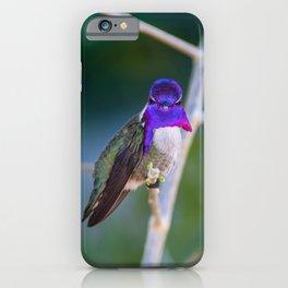 Male Costa's Hummingbird iPhone Case