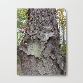 OLD BARK (Whiting Road Nature Preserve, Webster, NY) Metal Print