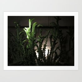 Nighttime in the Garden, 6 Art Print