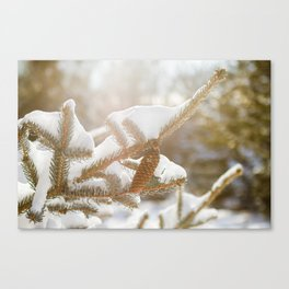 Snow-covered Evergreen Canvas Print