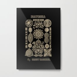 """Diatomea"" from ""Art Forms of Nature"" by Ernst Haeckel Metal Print"