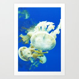 Blue Jellyfish Under the Sea Underwater Photography Saturated Pop Art Color Wall Art Art Print
