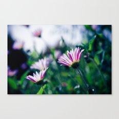 Flowers in Paris 1 Canvas Print