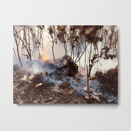 Ashy Forest Metal Print