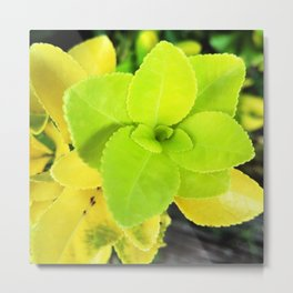 Macro Acid Lime Green Leaves Metal Print