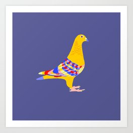 Colombian pigeon Art Print