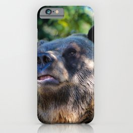sunny bear iPhone Case
