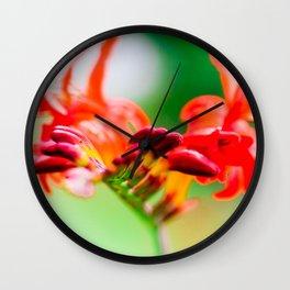 Crocosmia Lucifer Wall Clock