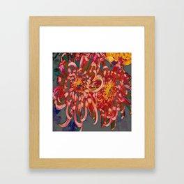Chrysanthemum-Red/Pink/Yellow Framed Art Print