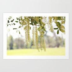 Lacy Curtain Art Print