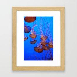 Jellies II Framed Art Print
