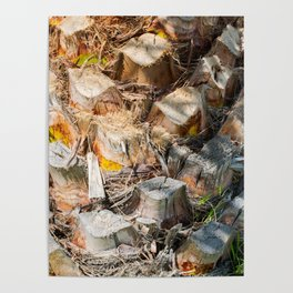 Palm Tree Trunk Poster