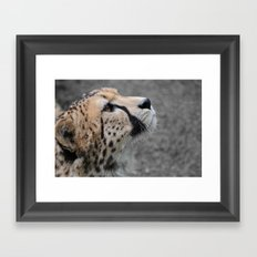 Cheetah 1 Framed Art Print