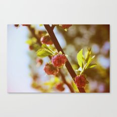 almonds in april Canvas Print