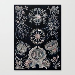 Sea treasures Canvas Print