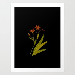 Ixia Chinensis Mary Delany Vintage Paper Flower Collage Floral Botanical Art Art Print