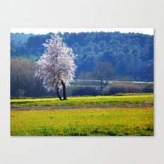 Two legs for one tree Canvas Print