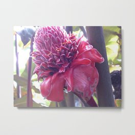 Porcelain Rose Metal Print