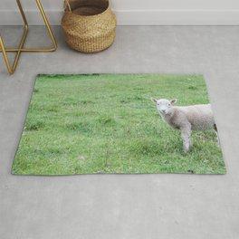 "Lamb ""Dang Paprazzi"" Rug"