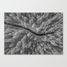 Snow pine forest Canvas Print