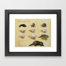Platypus Embryonic Life Cycle Framed Art Print