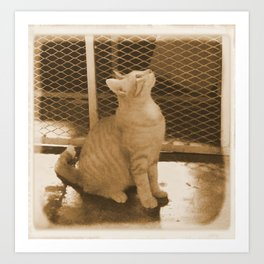 Cat Observe Spotted Art Print