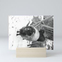 Alpine sheep, black and white photography Mini Art Print