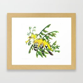 Australian Leafy Seadragon Framed Art Print