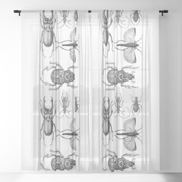 Vintage Beetle black and white drawing Sheer Curtain