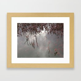 Cranberries Waiting To Be Harvested Framed Art Print