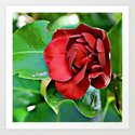 A Rose To Ignite Passion by knutsonkreations