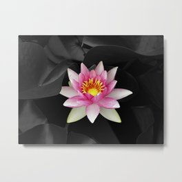water lily abstract IV Metal Print