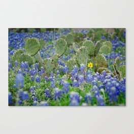 prickly springtime Canvas Print