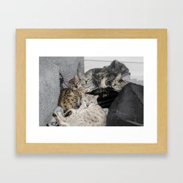 Bengal Cat Kitty Pile  Framed Art Print