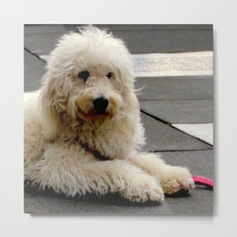 See My New Paw-dicure? Metal Print
